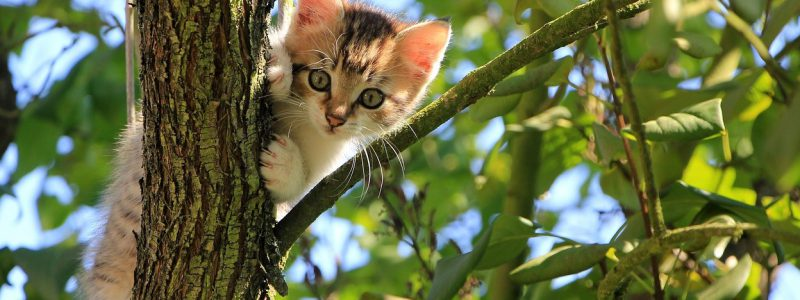 picture of a kitten up a tree